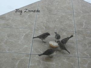 vrabiutele-noastre-asteapta-primavara