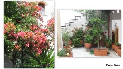vegetatie-in-grecia-3-manastirea-sf-nectarie-1