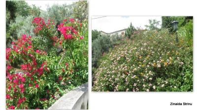 vegetatie-in-grecia-3-manastrisrea-sf-nectarie-2