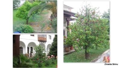 vegetatie-in-grecia-manastirea-kato-xenia