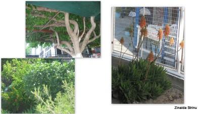 vegetatie-in-grecia-aghia-marina-insula-aegina-2