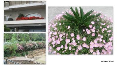 vegetatie-in -grecia-salonic